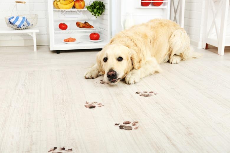 dog-paw-print