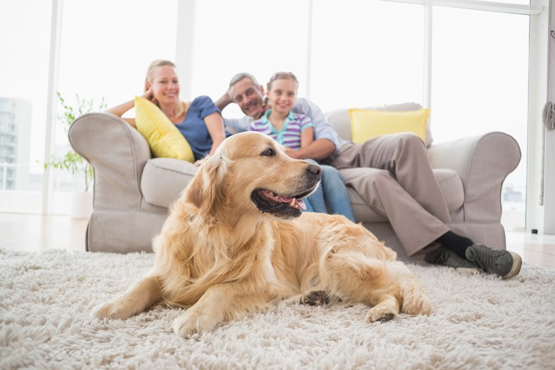 Keeping your home clean with a pet dog!