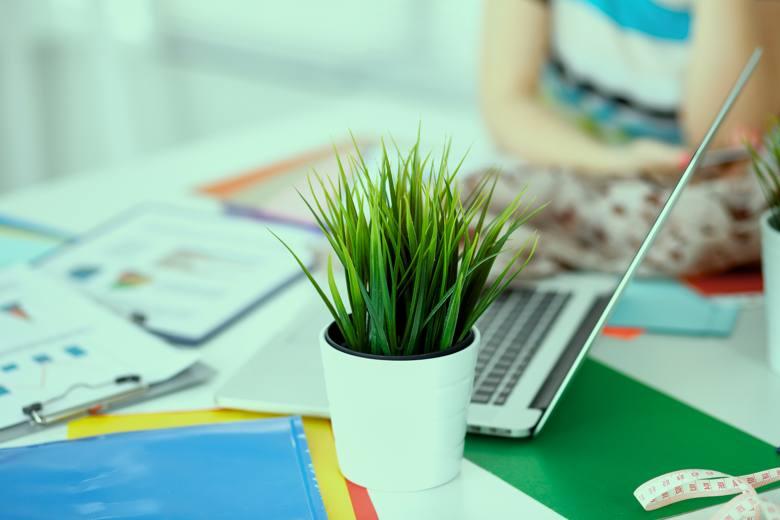 office-plant