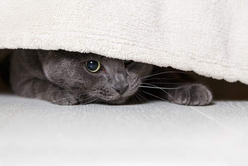 under-bed
